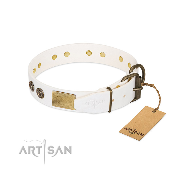 Corrosion resistant traditional buckle on full grain leather collar for walking your four-legged friend