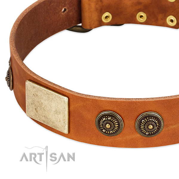 Adorned dog collar made for your stylish four-legged friend