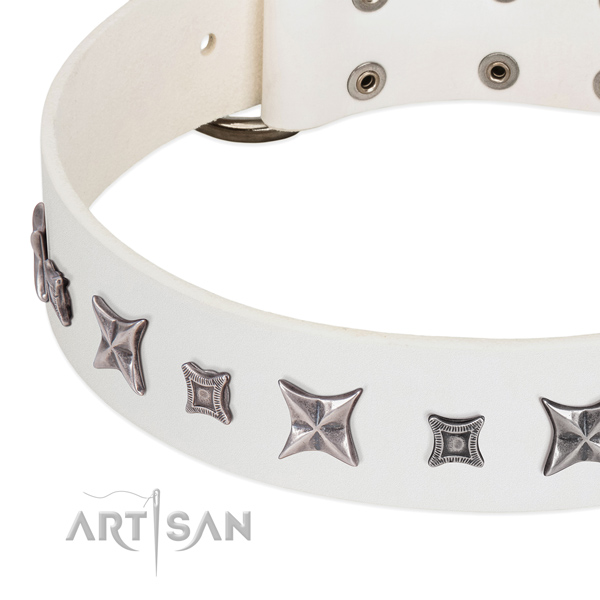 Daily walking studded full grain leather collar for your four-legged friend