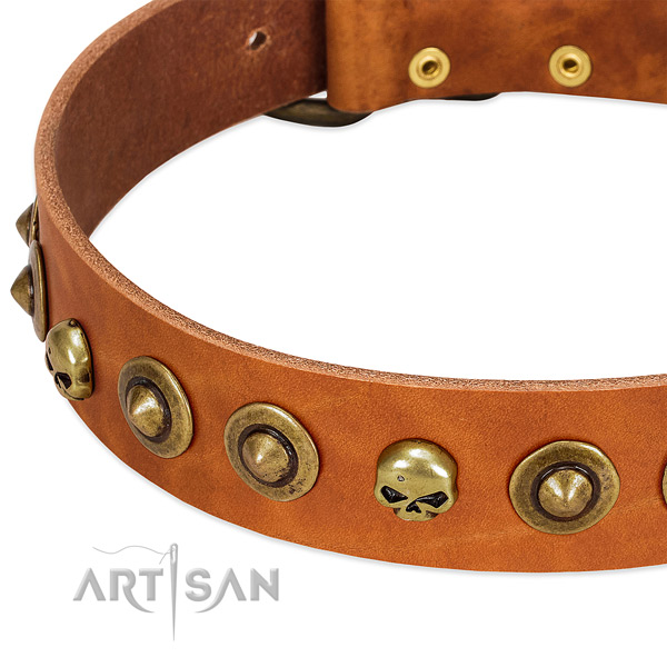 Exceptional studs on natural leather collar for your dog