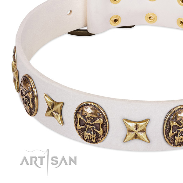 Incredible dog collar created for your stylish canine
