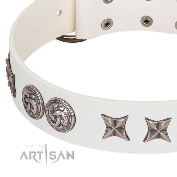 Natural leather collar with incredible studs for your four-legged friend