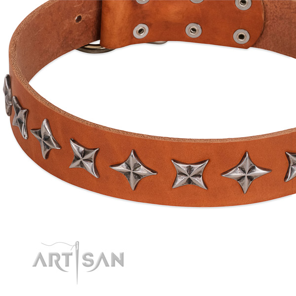 Daily walking decorated dog collar of finest quality genuine leather
