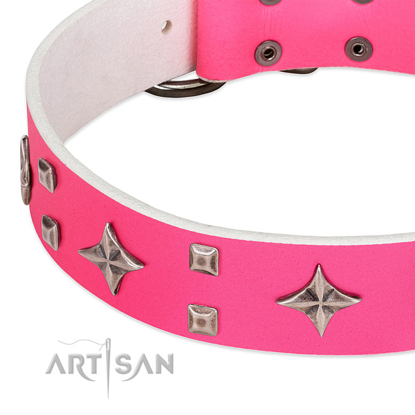 Fancy walking top rate leather dog collar with embellishments