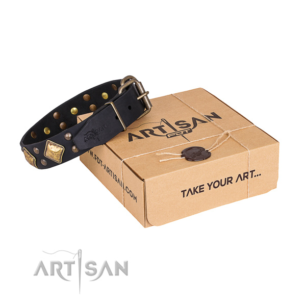 Everyday use dog collar with Designer rust-proof decorations