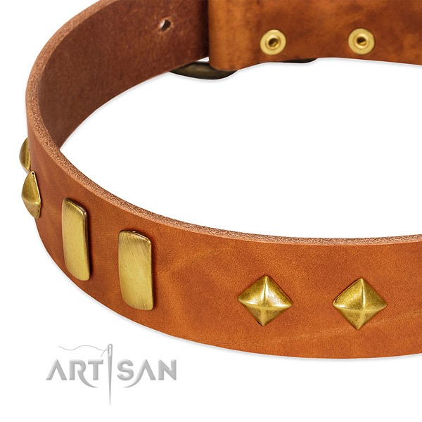 Everyday walking natural leather dog collar with incredible adornments