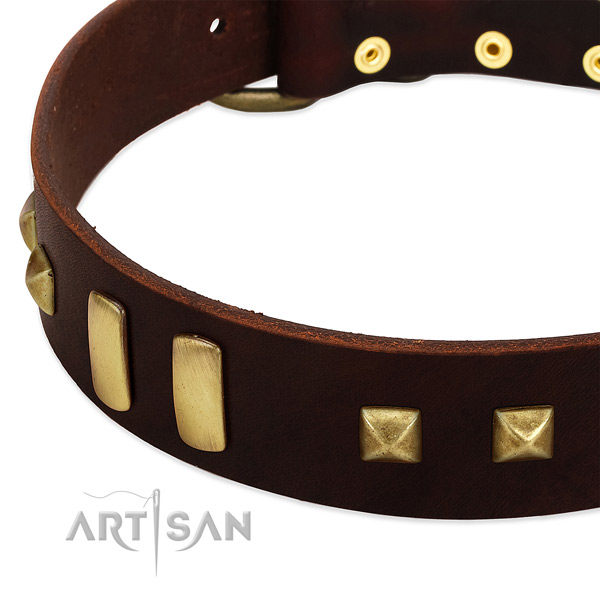 Top notch natural leather dog collar with adornments for everyday walking