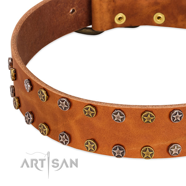 Everyday walking full grain natural leather dog collar with incredible studs