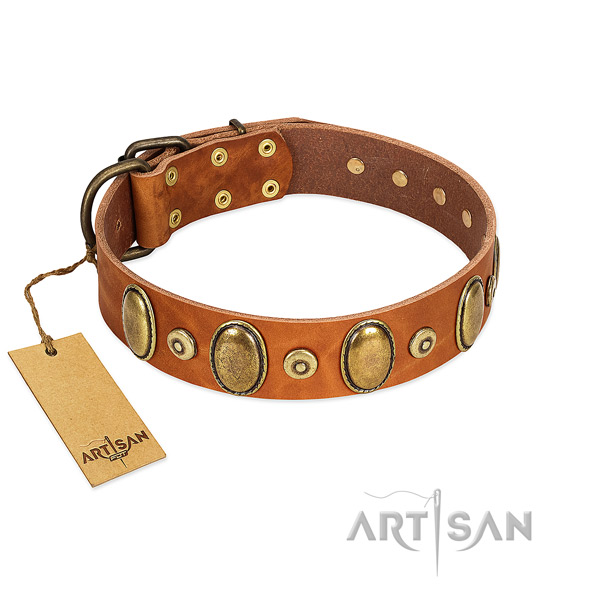 Rust resistant traditional buckle on dog collar for stylish walking