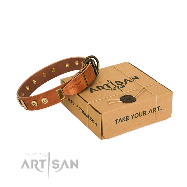 Full grain leather dog collar with fashionable studs for everyday walking