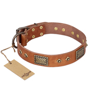 """Catchy Look"" FDT Artisan Decorated Tan Leather dog Collar"