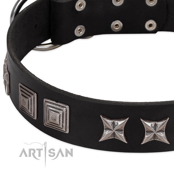 Daily walking full grain leather dog collar with top notch adornments