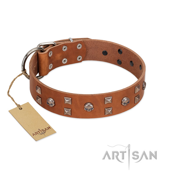 Everyday use dog collar of genuine leather with exceptional adornments