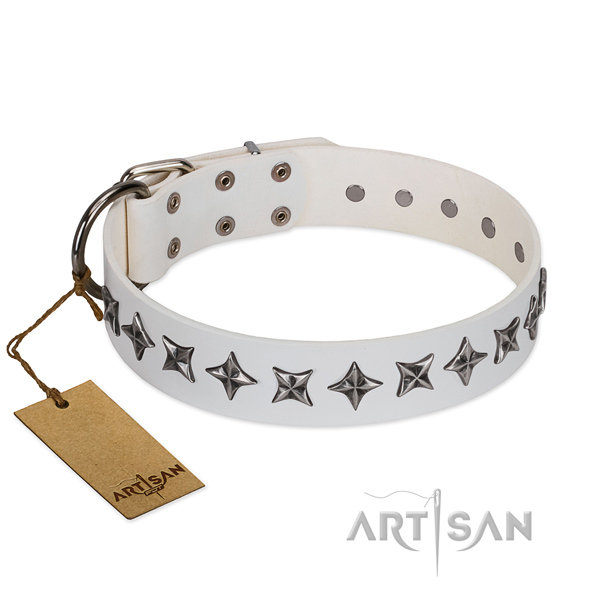 Everyday walking dog collar of best quality leather with decorations
