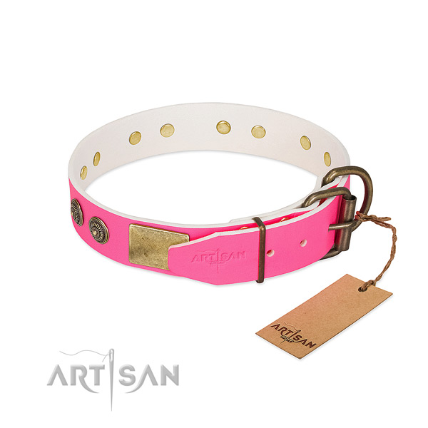 Corrosion proof buckle on full grain leather collar for walking your dog