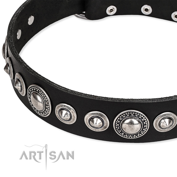 Basic training studded dog collar of quality full grain leather