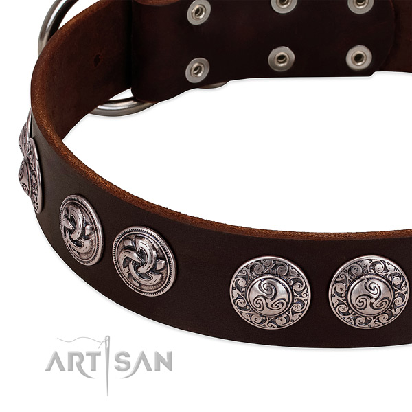 Amazing leather collar for your dog stylish walks