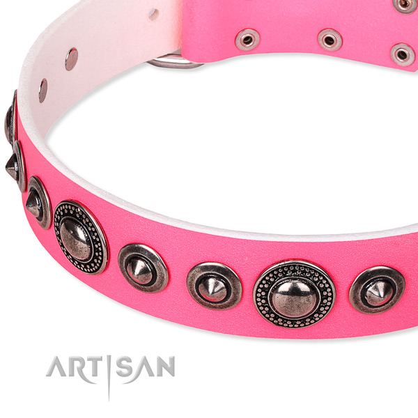 Fancy walking embellished dog collar of finest quality full grain leather