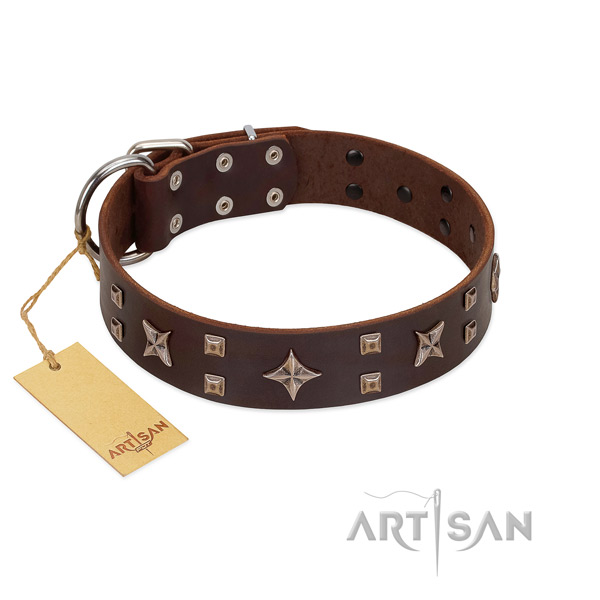 Walking leather dog collar with trendy studs