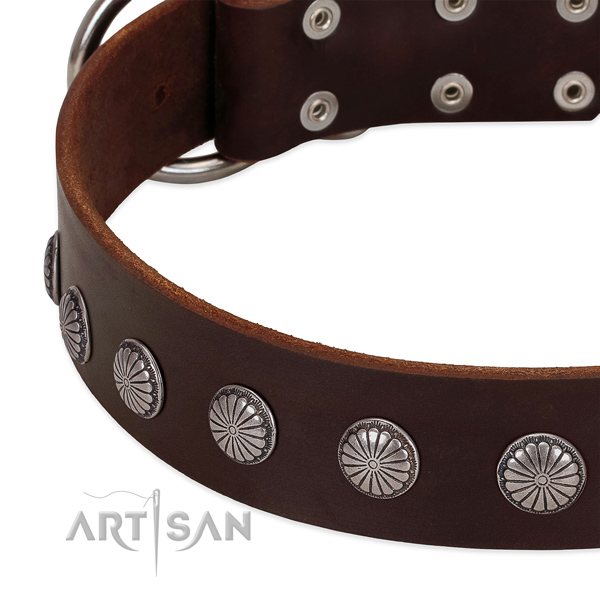 Soft leather dog collar with embellishments for everyday walking