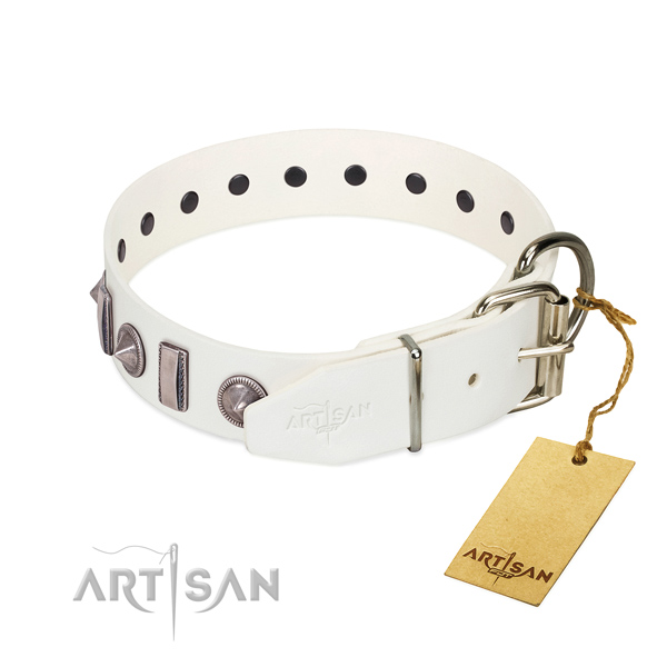 Everyday walking leather dog collar with impressive studs