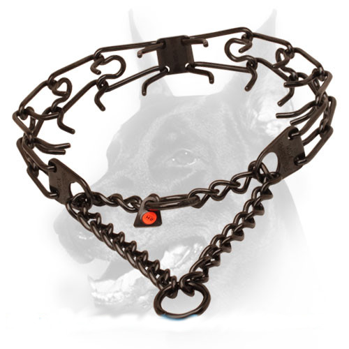 Prong collar of black stainless steel for ill behaved dogs