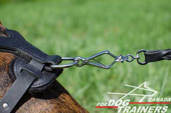 D-ring for leash for comfortable walking