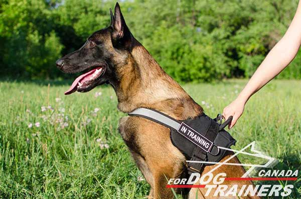Belgian Malinois Nylon Harness with Handle for Better Control