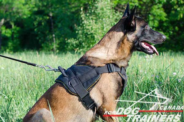 Belgian Malinois  harness nylon and strong for training