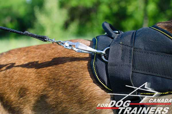 Belgian Malinois nylon harness with one D-ring on the back part and two on the back parts