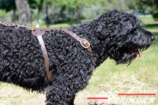 Tracking Leather Harness for Black Russian Terrier