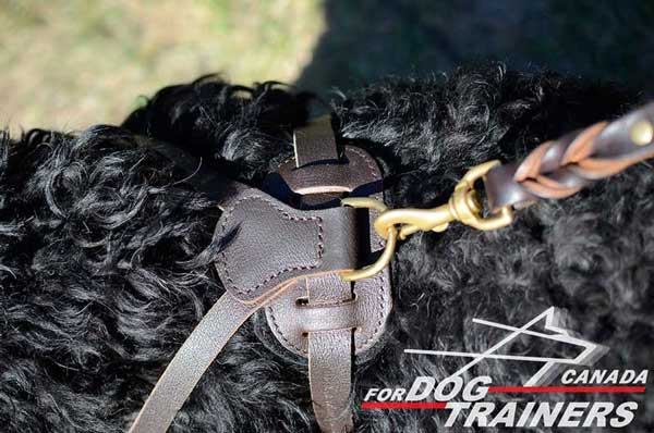 Black Russian Terrier harness with attachment for the leash