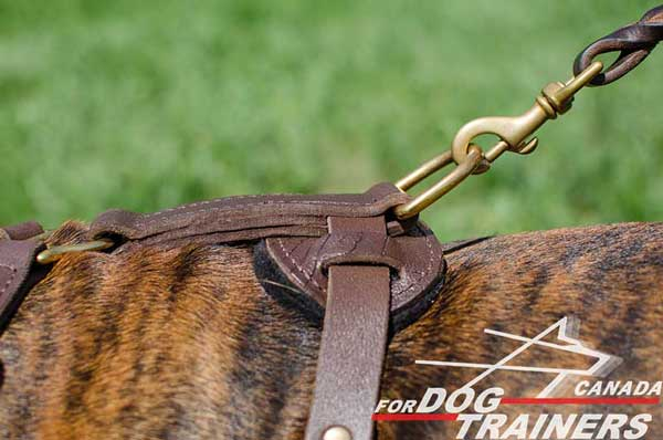 Boxer Leather Harness with Brass D-ring on Back Plate