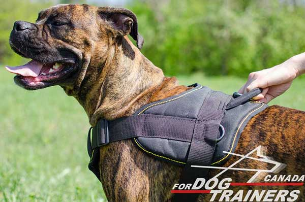 Boxer harness with grabbing attachment for emergency situations