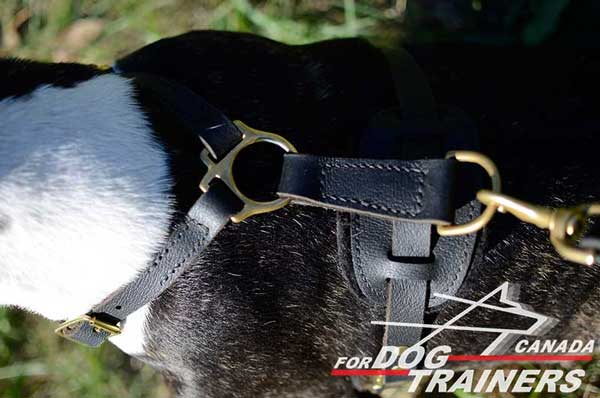 Bull Terrier Harness Stitched for Additional Strength