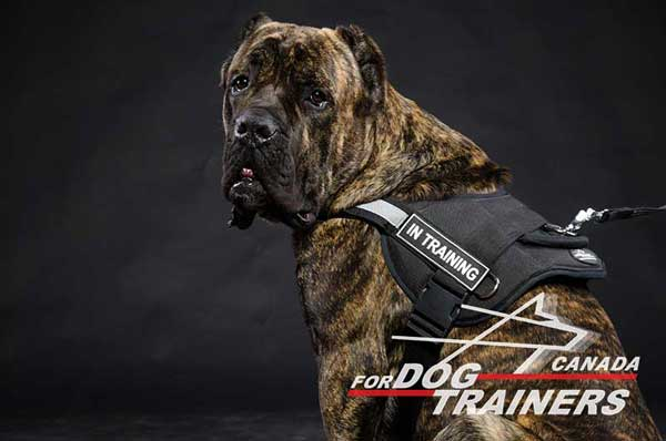 Easy-to-put Off Cane Corso Nylon Harness