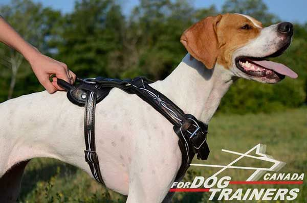 Leather Harness for English Pointer with Handle
