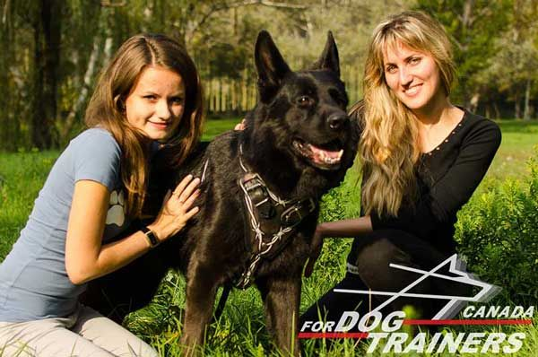 German Shepherd Harness is Easy Adjustable