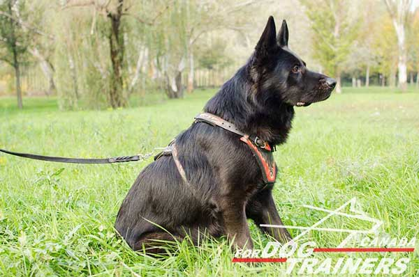 Leather Harness for German Shepherd Walking