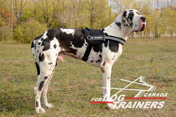 Great Dane Harness with Front Reflective Strap