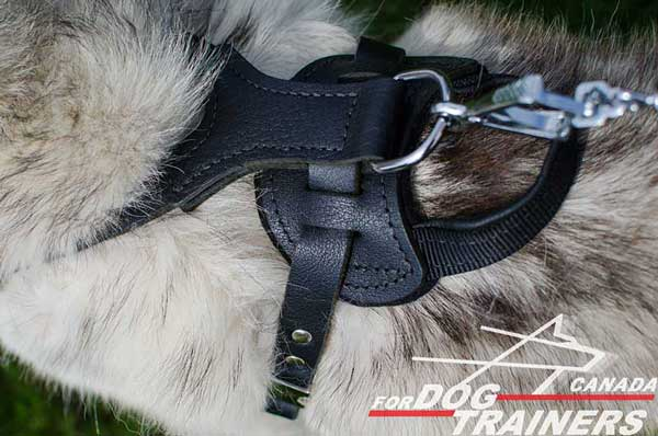 Husky leather harness with handle for agitation training