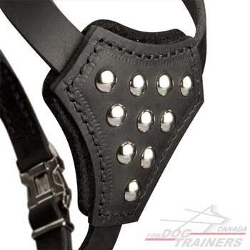 Padded Leather Harness for Puppies