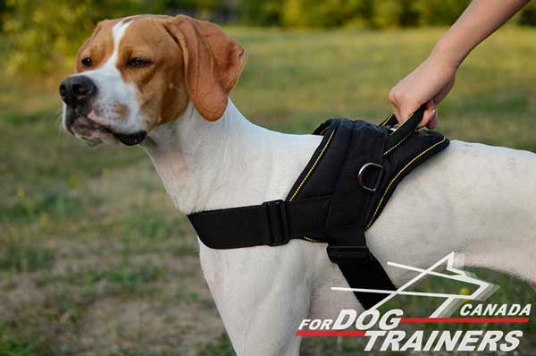 Nylon Harness for English Pointer Training