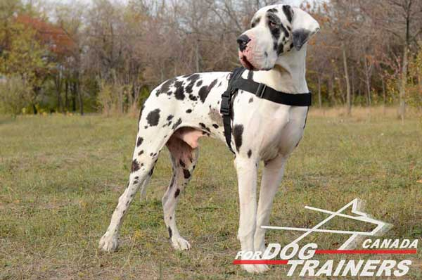 Great Dane Nylon Harness with Easy Adjustable Straps