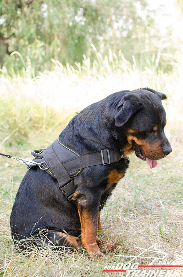 Rottweiler Harness Nylon-Made