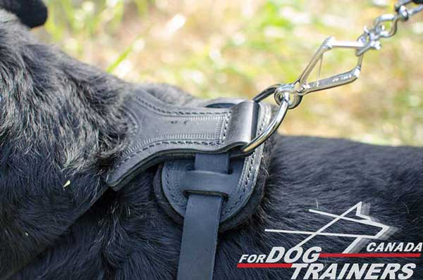 Rottweiler Harness Stitched with Strong Thread