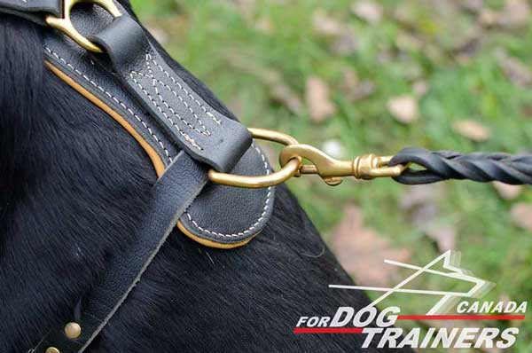 Rottweiler harness equipped with goldy D-ring