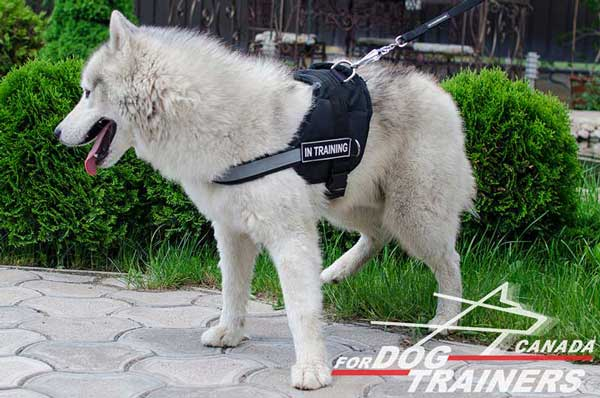 Siberian Husky Nylon Harness for Easy Tracking and Pulling