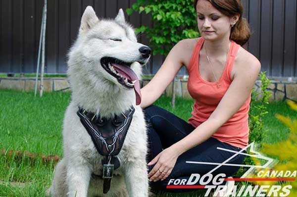 Leather Harness for Siberian Husky Fashionable