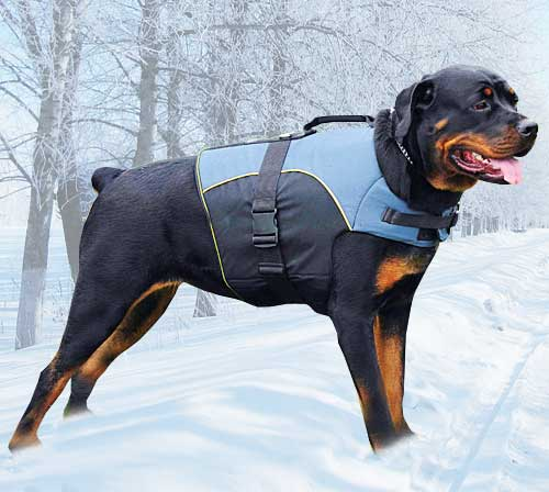 Weighted Dog Vest Canada